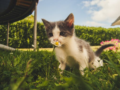 Senior Pet Care You Need to Know