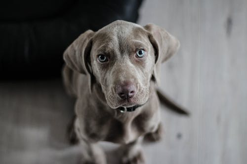 Easy Ways to Better Take Care Of Your New Puppy