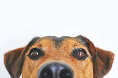 3 Types of Preventive Care For Happier and Healthier Pets