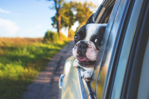 How to Care for Your Dog's Dental Health